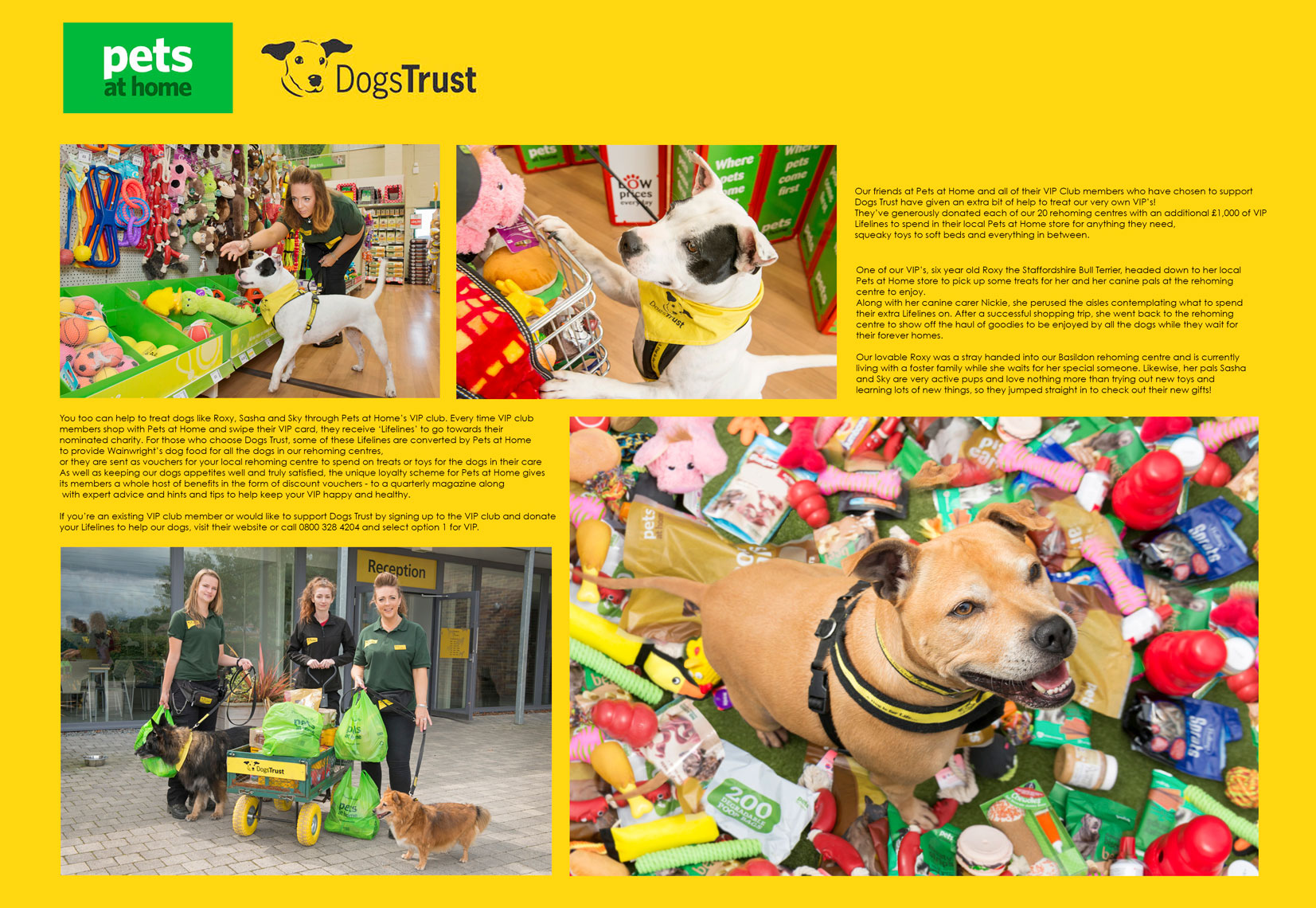 Dogs-trust-Pets-at-Home